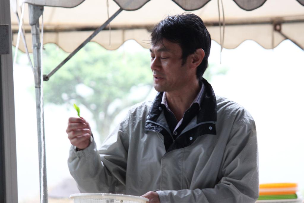 Inokura tea garden (1)