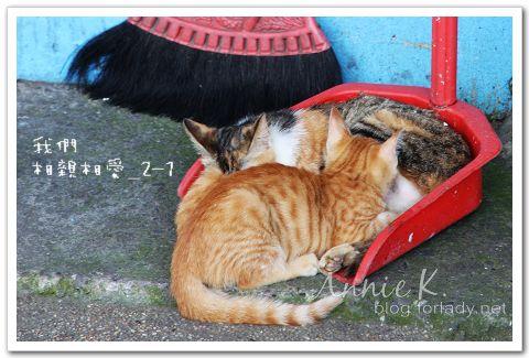 平溪線貓1