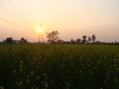 Season's Greeting (Dr. Shahid-Burewala Trekkerz (praying 4 Snow lake)) Tags: sunset season spring electricity fields sana sarson burewala drshahidiqbal pakistanyellow