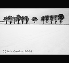 Almost Perfect Balance - Line of Winter Trees - Tayside Scotland (Magdalen Green Photography) Tags: trees winter blackandwhite bw lines rural landscape scotland cool curves scottish dyke simple tayside wintertrees calmnaturescene iaingordon almostperfectbalance lineofwintertrees