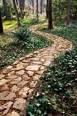 Sigue el camino de baldosas amarillas (ivan.pertica) Tags: madrid trees españa verde green leaves hojas spain arboles camino path stones country campo moro piedras campodelmoro fdm