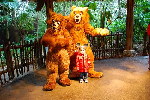 With Bears