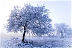 Invierno en Aiurdin