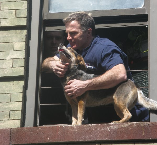 Fire Fighter Hero to Dog on a Ledge