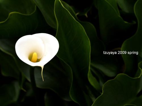 台北。竹子湖