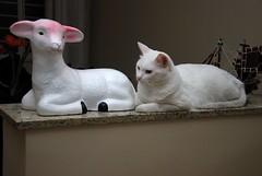 ROMEU E A OVELHINHA... (LuisCsar) Tags: cat gato felino picnik romeu nikond80 bemflickrbembrasil luiscsar