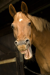 Laughing Horse!
