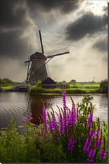 Windmill @ Kinderdijk (DolliaSH) Tags: city trip travel flowers light vacation sky sun holiday flower holland color tourism nature water windmill colors architecture clouds canon garden landscape photography photo topf50 europe colours foto tour place purple photos nederland thenetherlands wideangle windmills visit location tourist journey destination traveling visiting topf150 topf100 ultrawide 2009 1022mm hdr topf200 touring kinderdijk 1022 windmolen vindmlle windmhle windpomp moulinvent 50d mulinoavento vderkvarn canoneos50d dollia dollias sheombar aboveandbeyondlevel1