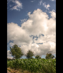 Maisfeld (Sam ) Tags: canon germany landscape deutschland europe eifel hdr trier bitburg koosbsch flickrestrellas sam8883 sailsevenseas