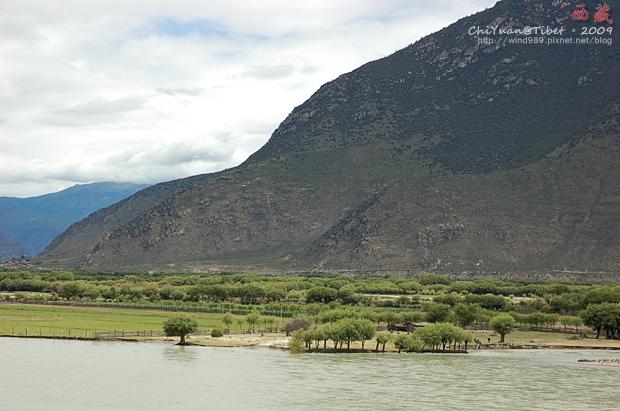 西藏林芝江河匯合處06.JPG