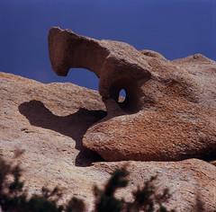 Viper? (schoeband) Tags: france 120 6x6 film mediumformat corse corsica granite kodake100vs ektachrome tafoni pentaconsixtl autaut caldarello