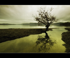 "The ""Other"" Balmaha Tree (Samantha Nicol Art Photography) Tags: longexposure sky snow tree beach nature water clouds reflections bay scotland branches hills loch toned lomond balmaha milarrochy artofimages bestcapturesaoi"