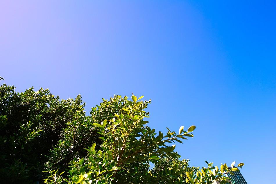 2009.9.3 的天空