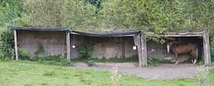 Horse in a Box (Ramses 2) Tags: trees horse green nature grass box natur gras grün bäume pferd schachtel grn bume unterstand