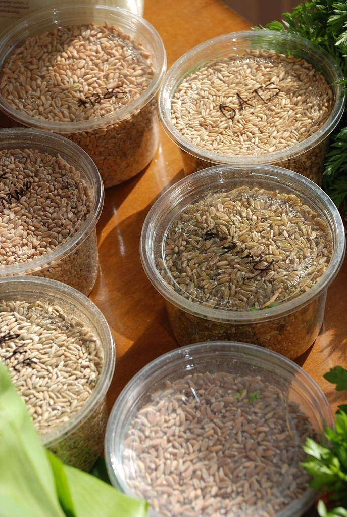 grains from Cayuga Organics