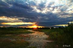 Thank you... (Dora Joey) Tags: sunset sky sun verde green thanks clouds landscape tramonto nuvole ray cielo fields sole grazie paesaggio raggi campi canon60d bestcapturesaoi
