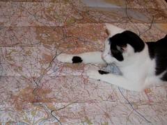 CatNav (Jimmy Son) Tags: cat map pixie bristolarea catmoment