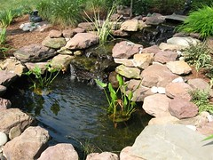 Water Features and Ponds | Masonry Division | Johnsons Landscaping 4 (Johnsons Landscaping Service, Inc) Tags: landscaping service johnson landscape design montgomery county bethesda chevy chase takoma park kensington silver spring potomac rockville olney northwest dc nw maryland md washington gardening stone work masonry walkways patios plantings paver driveways retaining walls segmental plan stairs lighting exterior scenic outdoors water features arbors trellises decks fences carpentry ponds johnsonslandscapingservice incresidentialandcommerciallandscapedesignservicesinwashington chevychase takomapark silverspring montgomerycountyotherservicesgardendesign landscapelighting exteriorlighting drainage stonewalls retainingwalls yarddesigns stepsandwalkways timberwallspatiosstepsandwalkwayspondsgardendesignstonewallsexteriorlightingpruningandtrimmingpaversflagstonewalkwayflagstonepatiodrainageretainingwallsyarddesignslandscapingservicejohnsonlandscapinglandscapedesign