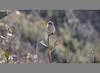 "I'm female! (Pepix2007) Tags: fab españa birds female spain nikon gijón wildlife asturias aves explore pájaros ms animali avian naturesfinest saxicolatorquata cartaxocomum otw outstandingshots flickrsbest passionphotography outstandingshotshighlight platinumphoto anawesomeshot avianexcellence diamondclassphotographer theunforgettablepictures thatsclassy stonechatsaxicolatorquata goldstaraward ""marvelousphotoaward"" natureselegantshots rubyphotographer paololivornosfriends lesamisdupetitprince ""mallmixstaraward"" maravillosomundo imagesforthelittleprince tarabillacomúnhembra qualitysurroundings"