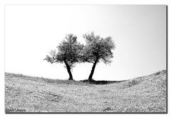 Quarrel (aviana2) Tags: bw tree landscape explore quarrel sonyalpha100 abigfave aviana2 fotocompetition fotocompetitionbronze