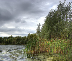 England: Bedfordshire Wetlands. Willows and Reeds (Tim Blessed) Tags: uk sky nature water clouds reeds landscape countryside scenery lakes wetlands ponds willows singlerawtonemapped