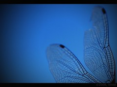 A day might come when you feel that everything is over... (vinod...) Tags: macro trek wings fb helicopter 1855mm pune vinod naturetrail chaturshingi handsomefellow canon400d butdead onepoordragonfly itotallylovetheirwings haveyouevercaughtadragonfly lolthatissadistic mailedyoupic theekhaibutnocourierandall youtieonyourhairandletthemflutteraboveyou likehorses sheeimnotsomeentomologist parojisabtheekhai willcatchforyou weusedtotiemanytogetherlikeabunchofgasballoons thatdayhascomebutwhereisthebeginning