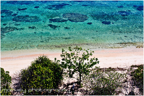 Shore line of Apo Island