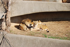 Getting some shade (BrotherShine) Tags: animals zoo louisvillezoo
