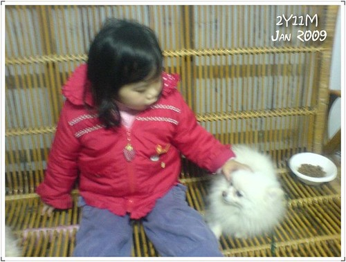 夏皮與狗03