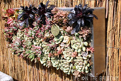 Roger's Gardens - Succulent Wall Art (Fern @ Life on the Balcony) Tags: flowers pots containergarden containergardening rogersgardens