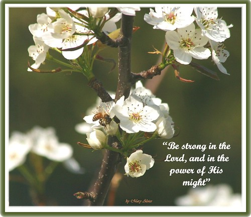 Ephesians 6:10 and 11 | Flickr - Photo Sharing!