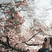 **season of cherry blossom** by Momota.M