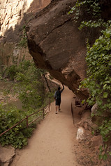 Riverside Walk (Zion Lodge, Utah, United States) Photo