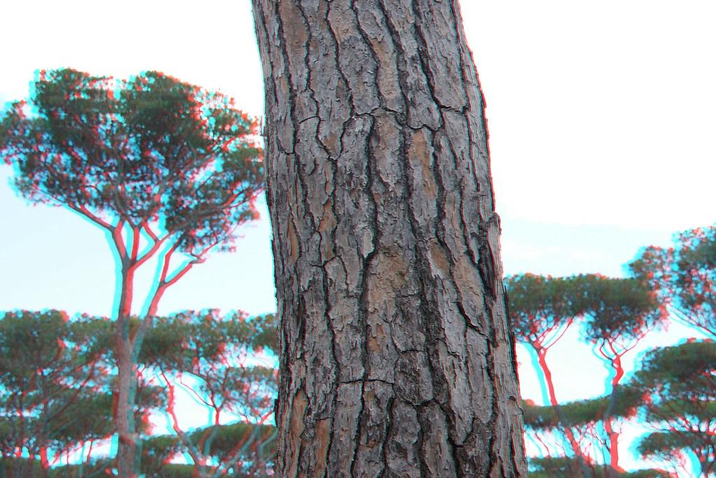 achter deze boom staat een ietske grotere boom