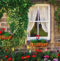 Window in Summer (vesna1962) Tags: flowers summer england plants house home window nature beautiful wall village britain yorkshire curtain bricks cottage boxes colourful climber picturesque twop blueribbonwinner mywinners theunforgettablepictures overtheexcellence dragonsdanger magicunicornverybest trolledproud