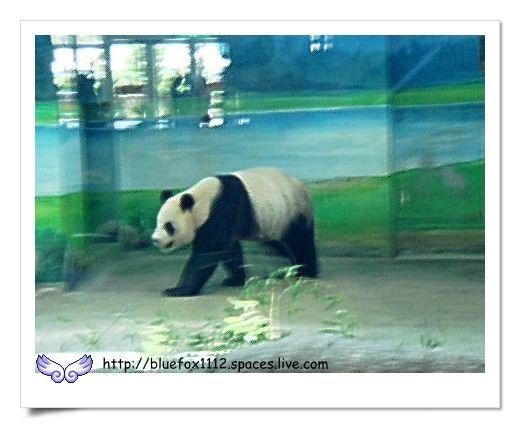 090627台北市立動物園05_疑似團團出現了