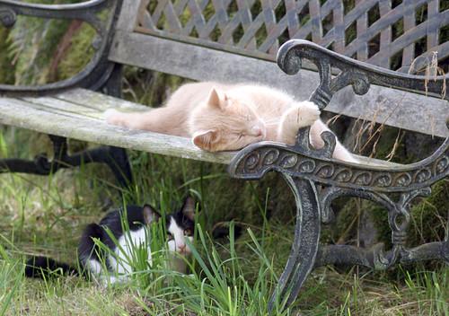Vill också vila däruppe!
