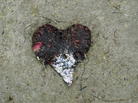 Heart-shaped Kelp
