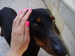 Ozzy (Luna (Debs)) Tags: pink dog rosa nails nailpolish unhas esmalte lapogee