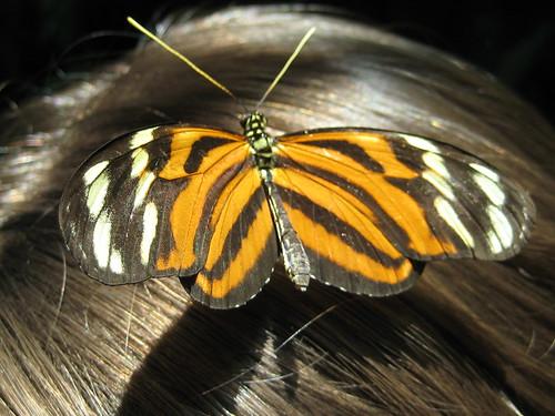 Butterfly Garden 026
