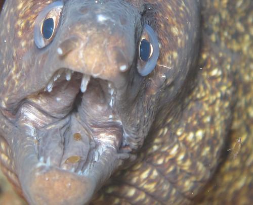 Τα επικίνδυνα ψάρια του Μεγανησίου