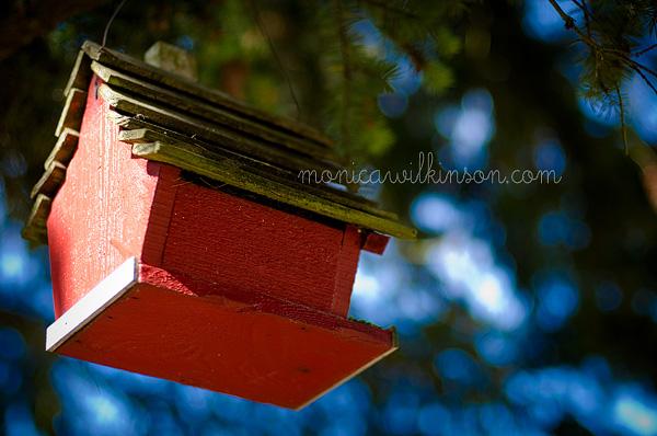 birdhouseWEB