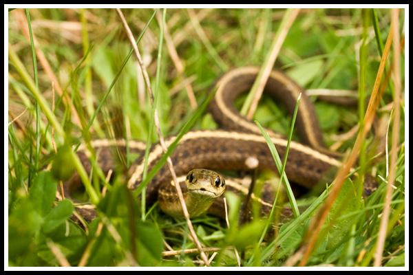 snake_2
