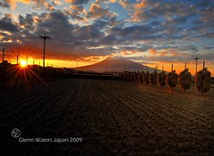 Iwaki Sunset Hirosaki Japan.  Glenn Waters 2,900 visits to this photo.  Thank you. (Glenn Waters in Japan.) Tags: sunset sky mountain field japan volcano nikon rice paddy dusk harvest explore aomori hirosaki  frontpage     iwaki touhoku   machi     iwakisan   explored  d700  glennwaters