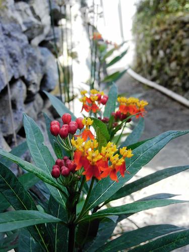 Flower-067