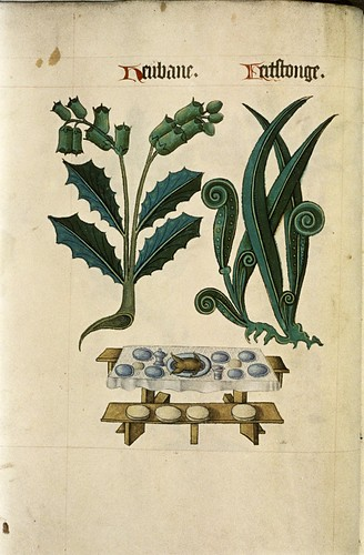 Henbane and Hart's Tongue. Table, laid, Animal on pewter dish. Benches.