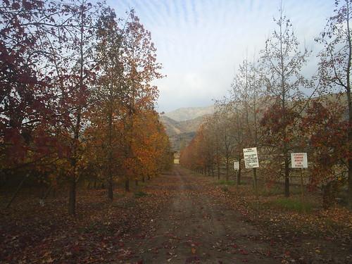 Camino Privado