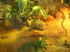 20110602酷節能體驗營 (55) (fifi_chiang) Tags: zoo taiwan olympus taipei ep1 木柵動物園 17mm 環保局 酷節能體驗營