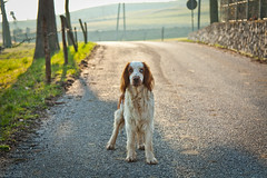 Take me with you (BalicDalibor) Tags: dog me italia with blind you campagna take montagna selo contrada schio tretto