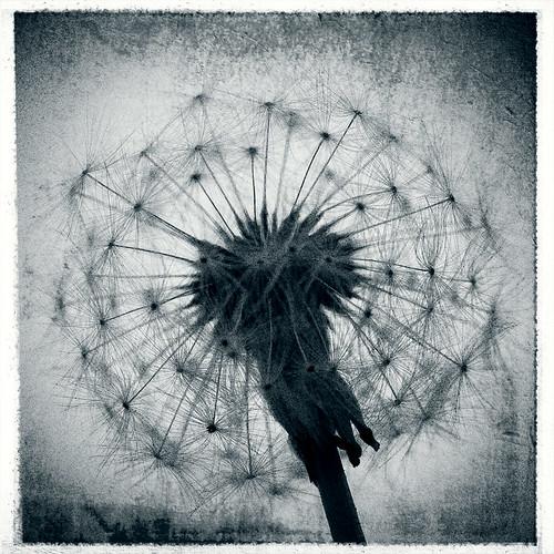 IMAGE: http://farm4.static.flickr.com/3460/3192817048_edfaa6c2b4.jpg